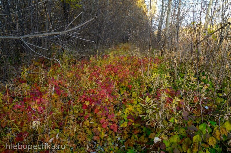Ферментированный чай «Осенний бриз» из листа лесной ежевики