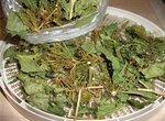 Зелень, хрен, чеснок для консервации, сушеные