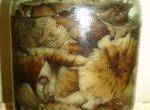 Лесные грибы Натуральные