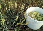 Ферментированный чай из железницы крымской (татар чая)