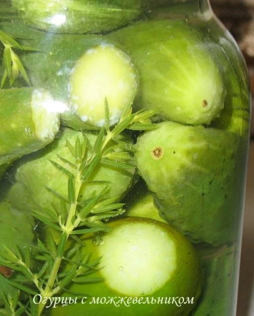 Огурцы с хвойным ароматом