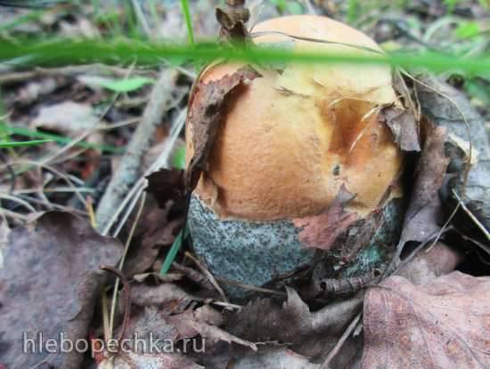 Подготовка грибов к заморозке