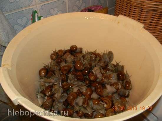 Этюд о виноградных улитках