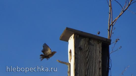 Таня - юный орнитолог