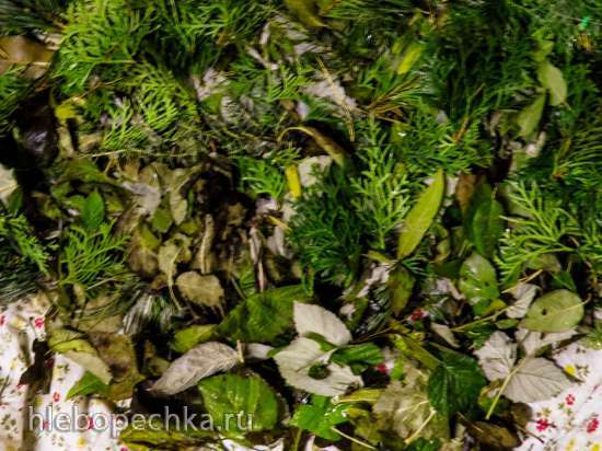Морозный чай из хвойных и листьев естественной ферментации