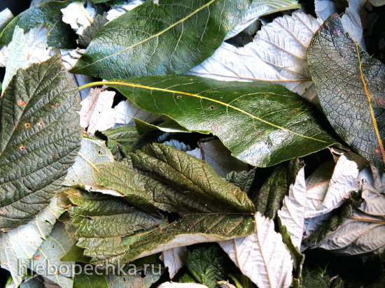 Ароматный противовоспалительный ферментированный или томленый чай