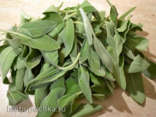 Шалфей в оливковом масле