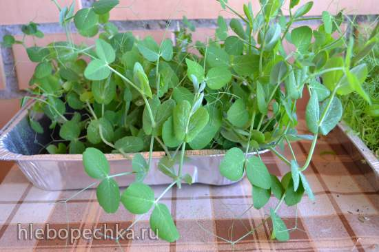 Винегрет овощной «фри» с ростками зеленого горошка, под кисломолочным соусом