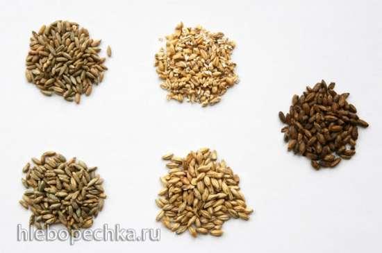 Солод, солодовые препараты - применение в хлебопечении
