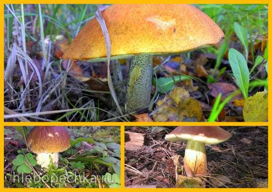 Губник - тверской пирог с грибами
