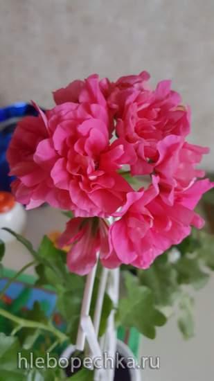 Цветочки: моем, пересаживаем, подкармливаем