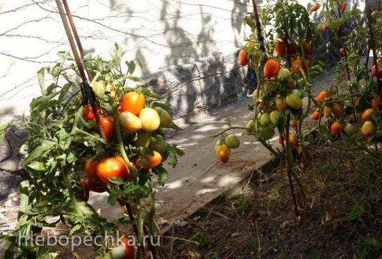 Сажаем, растим, собираем урожай...