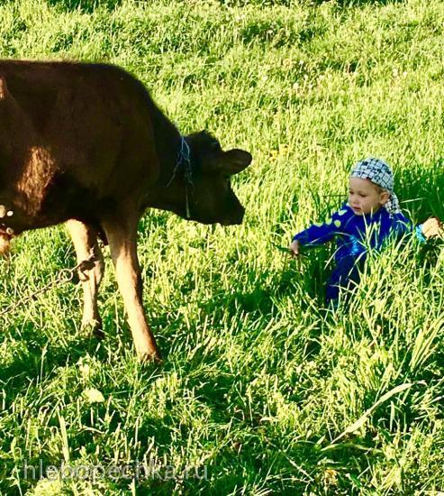Хочешь быть газелью? Готовь вместе с Гюзелью!