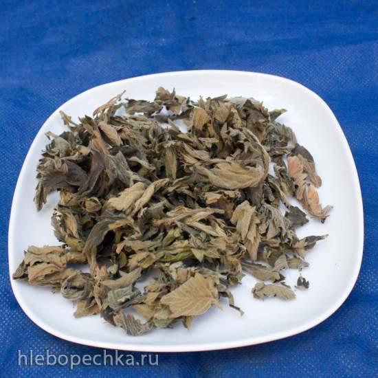 Репешок как растение для чая