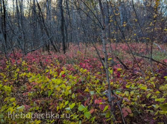 Ферментированный чай Осенний бриз из листа лесной ежевики