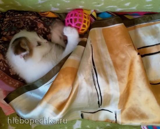 Дочь просит котенка