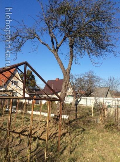 Возьмите шефство над новичком (садоводом-огородником)