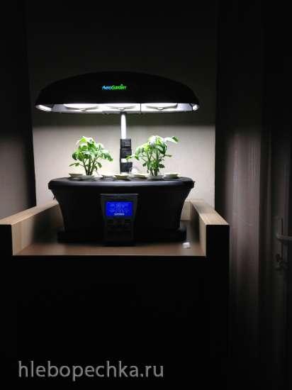 Аэрогарден - комнатный сад