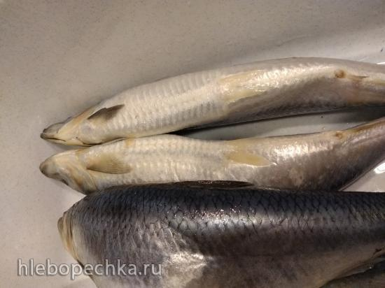 Рыбный флуд