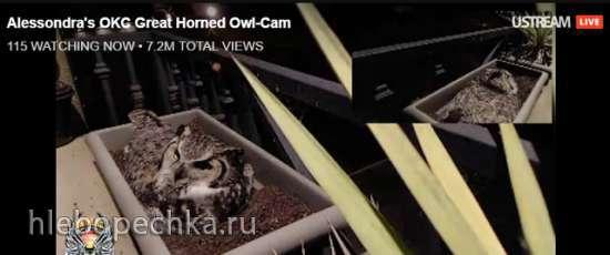 Веб-камеры с животными