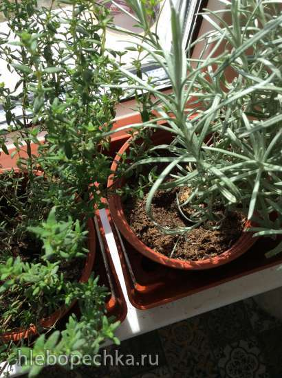 Сад и огород на балконе