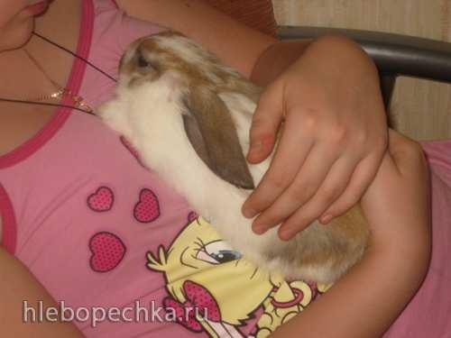 Стифадо из кролика