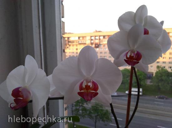 Цветочки: моем, пересаживаем, подкармливаем... (всё о комнатных растениях)