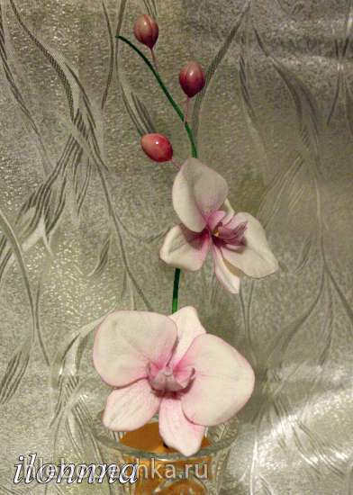 Орхидея Фаленопсис (мастер класс)