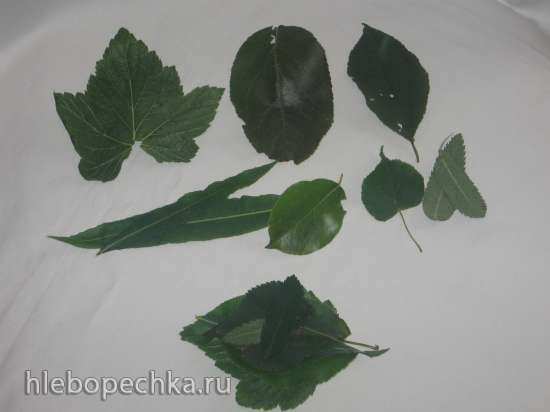 «Деревенский чай» (ферментированный) - семь в одном