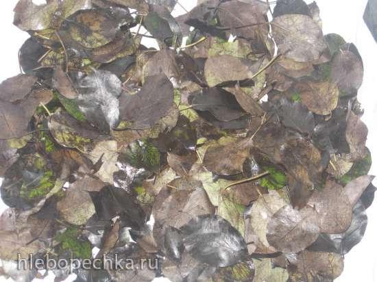 Ферментированный чай из листьев садовых и дикорастущих растений (мастер-класс)