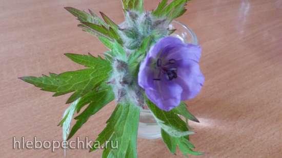 Ферментированный чай из листьев Герани луговой (трава муллы)