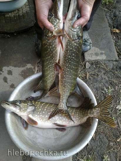 Рыбные котлеты «Сладкая парочка» (посвящается Тане Скарлетт)