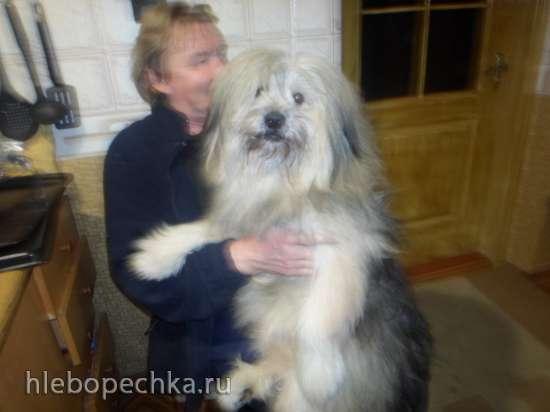 Человек собаке друг!!!