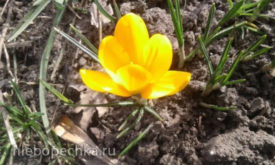 Цветы на моем участке
