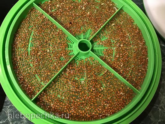 Ростки, проростки, и проращиватель семян, зерен, зелени