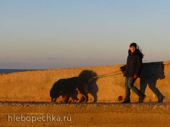 Первые щенки тибетского мастифа