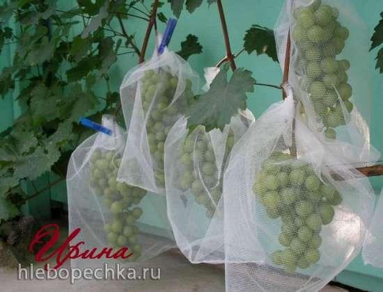 Защита виноградника от ос