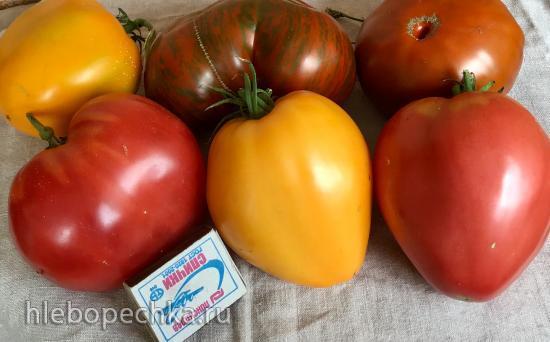 Какие сорта томатов посоветуете для теплицы?