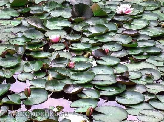 Загородная жизнь - обустройство жизни на своей земле во всем ее разнообразии