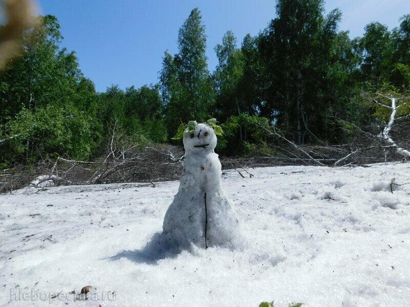 Синее небо, зелёные берёзы и... снеговик. Или место встречи братьев-месяцев