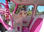 Собака и автомобиль