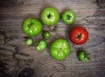 Про выращивание помидоров
