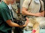 Бесплатная диспансеризация животных в Москве