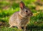 Аллергия на наполнитель для туалета у кролика
