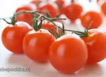 О пестицидах в сельском хозяйстве