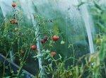 Выбор посадок высокомаржинальных культур на садовом участке