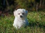 Лечение собаки от аллергии