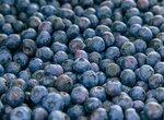 Комбайн для сбора ягод и как перебрать быстро ягоду (видео)