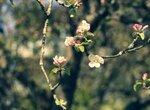 Чем вы обрабатываете деревья и кусты весной?