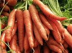 Советы по выращиванию моркови